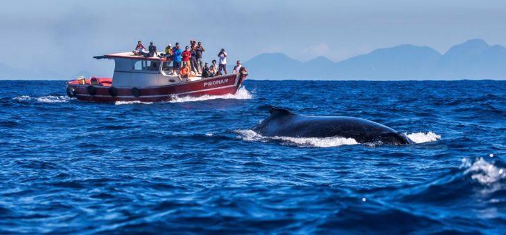 Capital das baleias