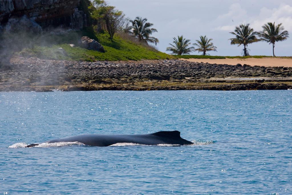 Expedição Abrolhos Temporada das Baleias