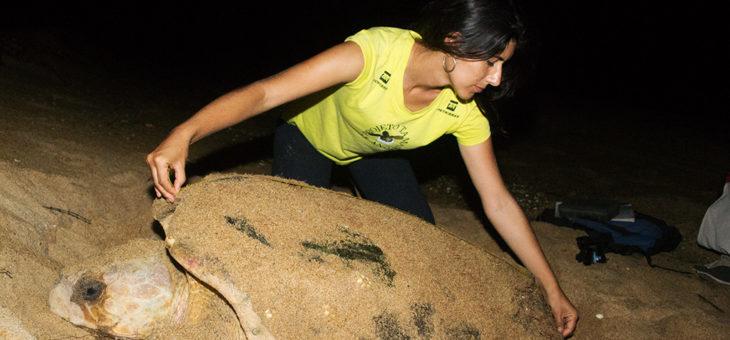 Curso Biologia Reprodutiva e conservação de Tartarugas Marinhas 15 a 17 de dezembro
