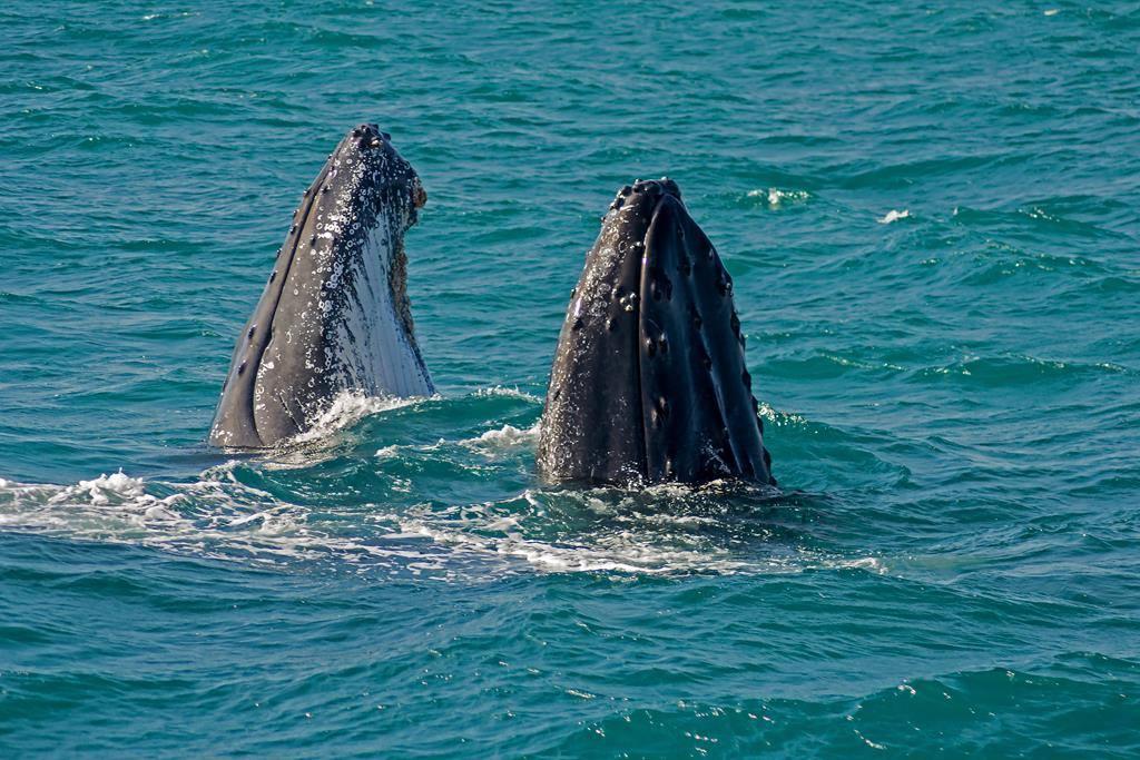 Observação de Baleias em Caravelas - BA