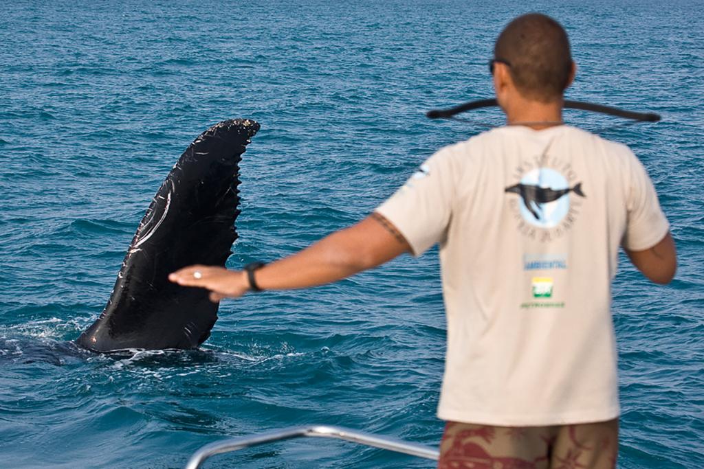 Turismo Científico com Baleia Jubarte em Abrolhos